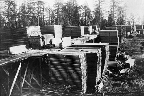 Lumber stacks at the Griswold Lumber MIll