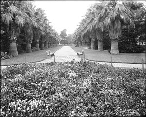View of the flowers and palm trees in Eastlake Park (later known as Lincoln Park)