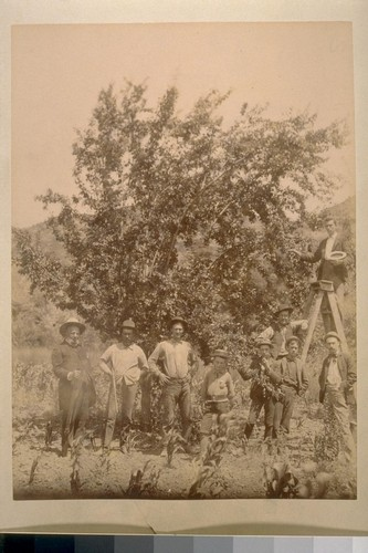 [Men and boys posing for portrait near fruit trees