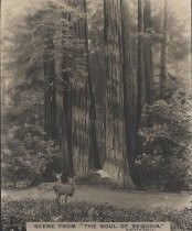 "Scene From ""The Soul of Sequoia"""