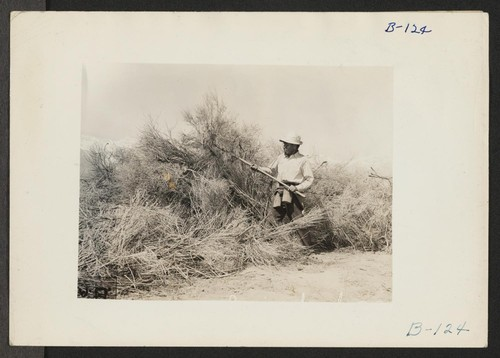 Manzanar, Calif.--Clearing brush from land at reception center for evacuees of Japanese ancestry. Photographer: Albers, Clem Manzanar, California