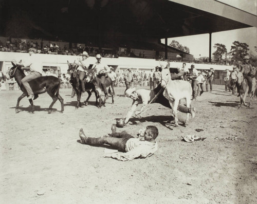 Donkey Watermelon Race on Farmers Day at the racetrack at the Sonoma County Fair, Santa Rosa, California, 1972