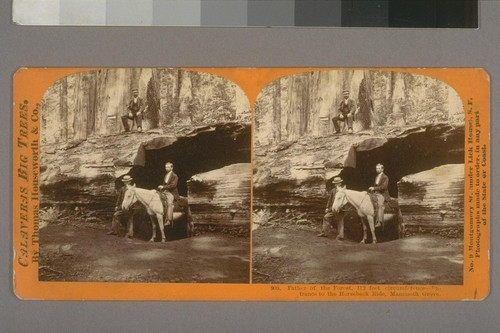 Father of the Forest, 112 feet circumference--Entrance to the horseback ride, Mammoth Grove.--Photographer: Thomas Houseworth--Photographer's number: 903--Place of Publication: San Francisco.--Photographer's series: Calaveras Big Trees