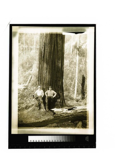 [Two men posing at the base of a tree in a forest]