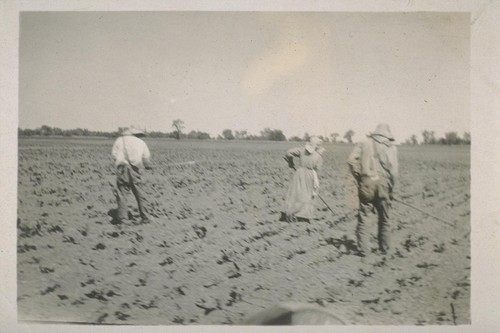 Jap beet workers near Woodland. [Japanese laborers tilling a field.]