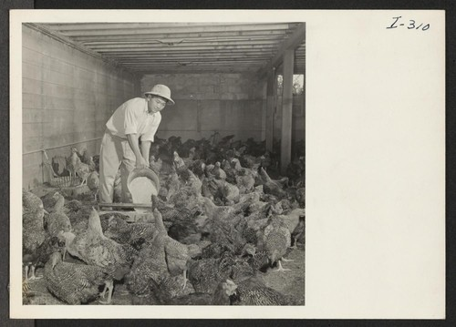 Harvey Suzuki is manager of the poultry farm of L. L. Logan in Kennett Square, Pennsylvania, about 25 miles from