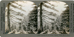 Looking up the Valley, Yosemite Valley, Cal., U. S. A., 5029