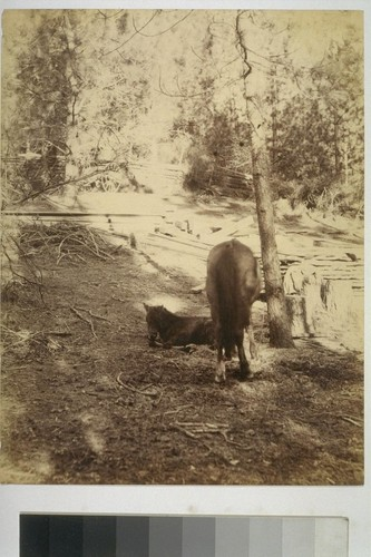[Horses. Unidentified location.]
