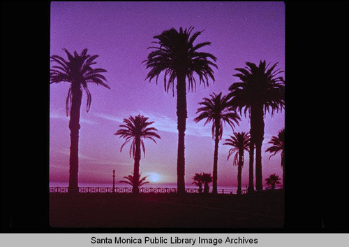 Palisades Park at sunset, Santa Monica, Calif