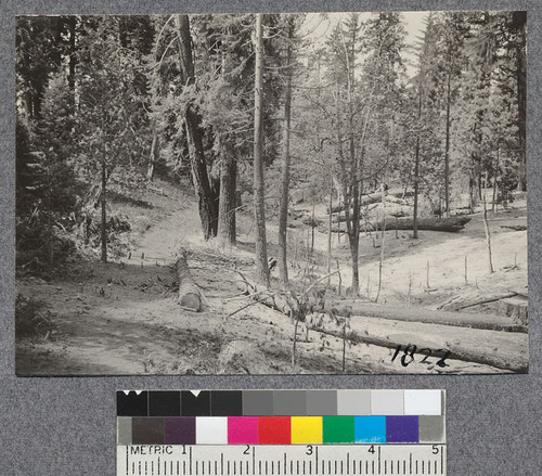 Slash disposal at Madera Sugar Pine, 1921. Broad cast burn within fire lines along railway right-of-way and around donkey settings