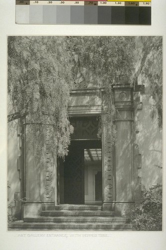 Art gallery entrance, with pepper tree