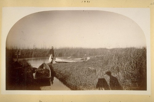 Ditch to Montgomery's pond. 18th swan. 1881