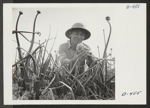S. Hanasaki, former vegetable seed specialist from San Jose, California, where he owned his own business and sold under the