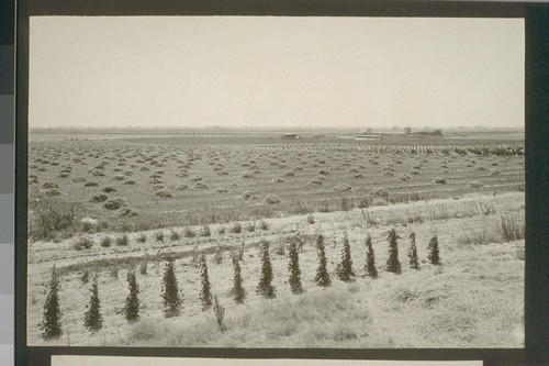 No. 240. Birdseye view of a portion of the second unit of the settlement taken from allotment 327. August 14, 1923