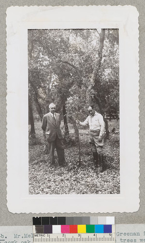 Mr. Melchor Marsa and Mr. G. D. Greenan inspect the cork oak plantation at Chico. The trees were stripped in July 1940 and are making good recovery. Marsa said that the plantation looked just like some areas in Portugal. June 1942. Metcalf