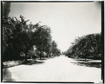 [Unidentified street lined with trees, Sacramento]
