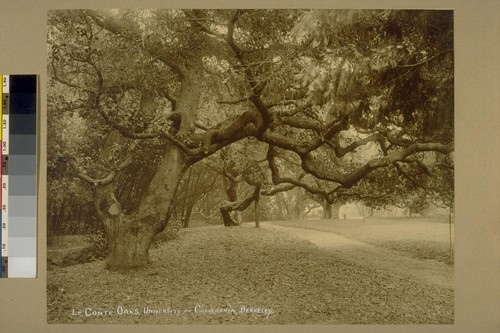 Le Conte Oaks, University of California, Berkeley