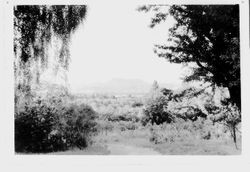 Mount Saint Helena viewed from Luther Burbank Experiment Farm, about 1931-1937