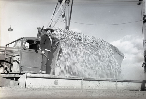 Max Baer unloading a truck full of sugar beets
