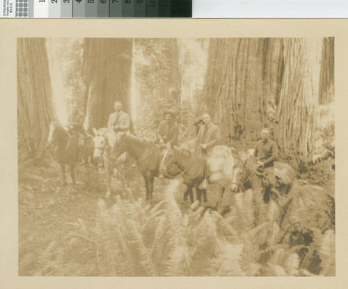 [Scene in timberland of the Little River Redwood Co., Crannell California, September 1924]