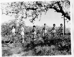 Young women in shorts in a Gravenstein apple orchard in bloom in Sebastopol, California, 1961