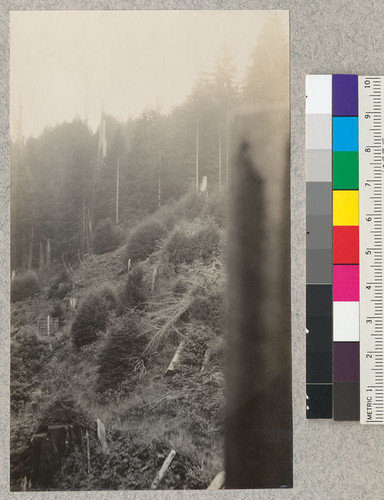 "Redwood region. Looking up a Bear Gulch branch. Site of old ""destruction"" photo of ""Annie"". Panoramic with #5103 and #5105. E. Fritz, October 1929"