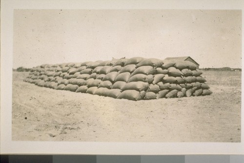 Sacks of wheat, cut and threshed and sacked by the combined harvester. 1903