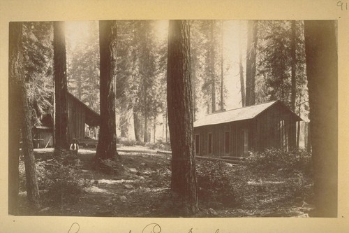 Among the Pines. McCloud. 1883