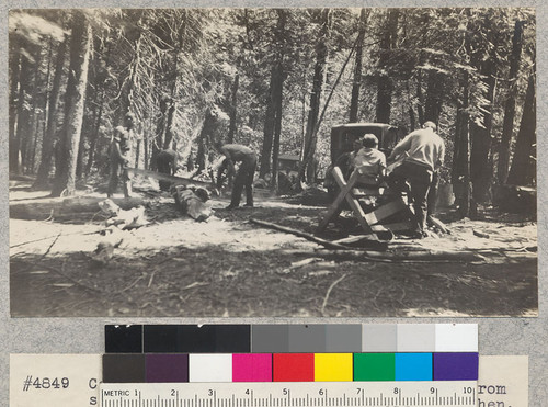 Camp Califorest. A group just returned from side-camp cutting alder wood for the kitchen. E. Fritz, August 1929