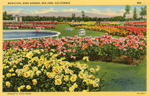 Roses In Garden: Calisphere: San Jose Municipal Rose Garden