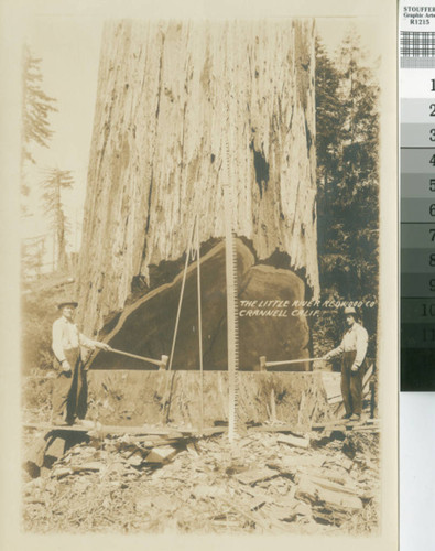 Little River Redwood Co., Crannell, Calif. [promotional photograph with loggers, tools and redwood with undercut]