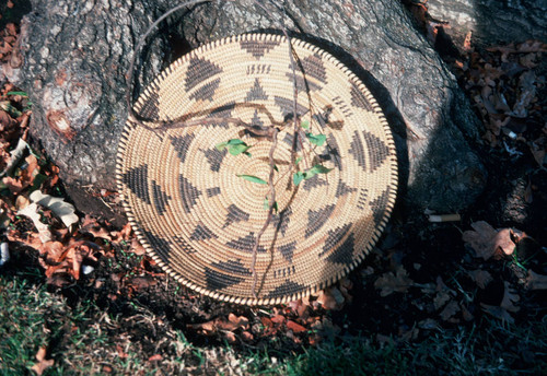 Basket at base of tree