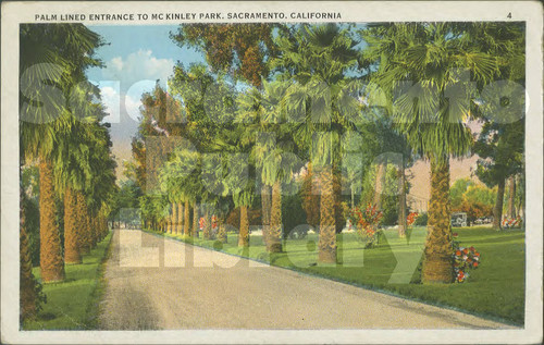 Palm Lined Entrance to McKinley Park