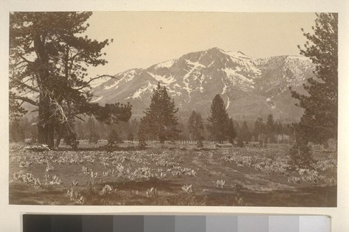 [Field and mountains. Unidentified location.]