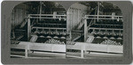 "Oranges 10. Washing oranges in ""Parker cylinder brush washer,"" Redlands, Calif., 44"
