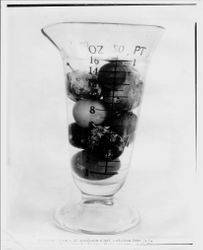 Measurement vase with 13 varieties of ordinary (i.e. non-Burbank) plums