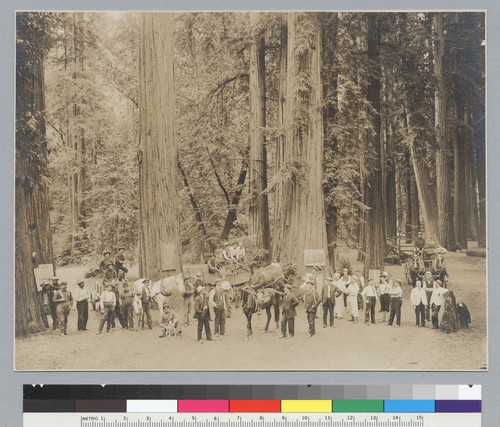 Group of men with horses and wagons, Bohemian Grove. [photographic print]