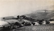 Mirassou Vineyards, 1875
