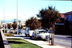 View east on the 7100 block of Bodega Avenue, Sebastopol, California, January, 1980
