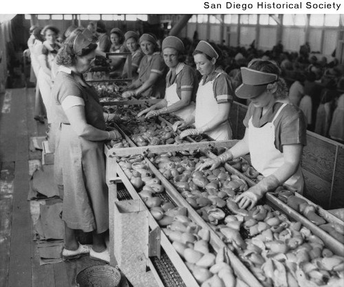 Women sorting peppers for packing