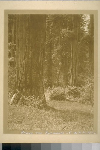 Among the Redwoods - C.W.R. and N.Co