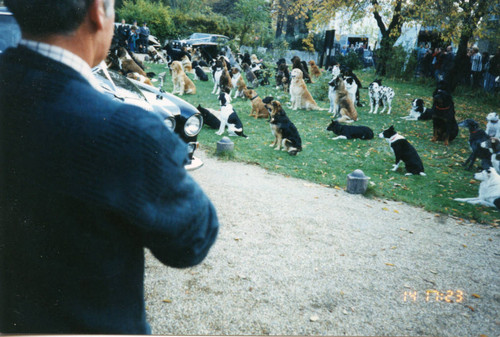 Production Still From 101 Dalmatians 1996 Calisphere