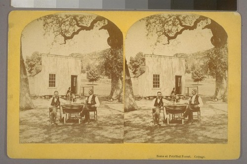 Scene at Petrified Forest. Cottage.--Photographer: R. E. Wood--Place of Publication: Santa Cruz, Cal'a