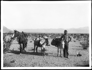Desert prospector with two mules and a horse, Mojave Desert, 1890
