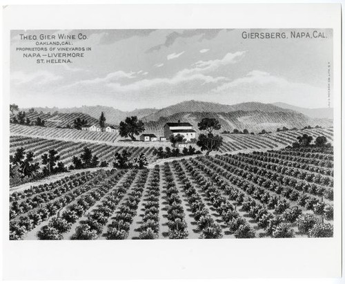 Lithograph postcard showing the Giersburg, Napa County vineyards of Theo Gier Wine Co. of Oakland, California, post 1907