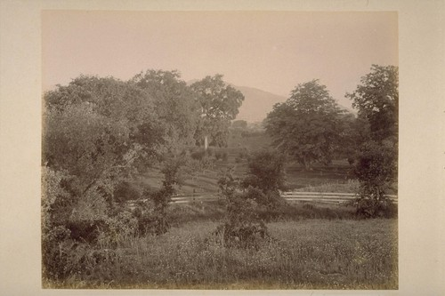 View on Farm of Geo. H. Maxwell, Showing Oak and Locust Trees and Young Peach and Apricot Orchard. Sonoma Mountain in the distance