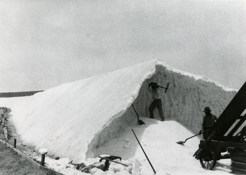 Men loosening the salt from the stiffened mound at the Bateque Salt Works