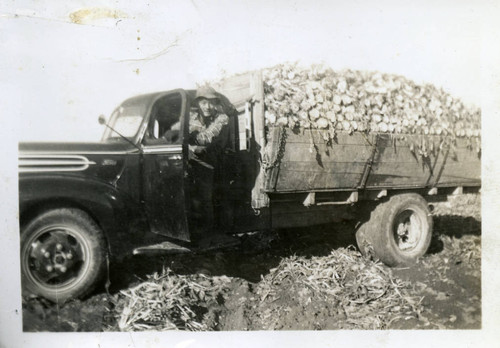 Nisei farm laborer driving a truck