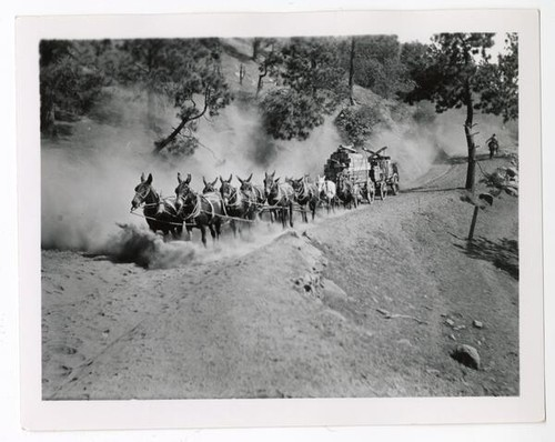 Team of horses hauling logs, Groveland, California
