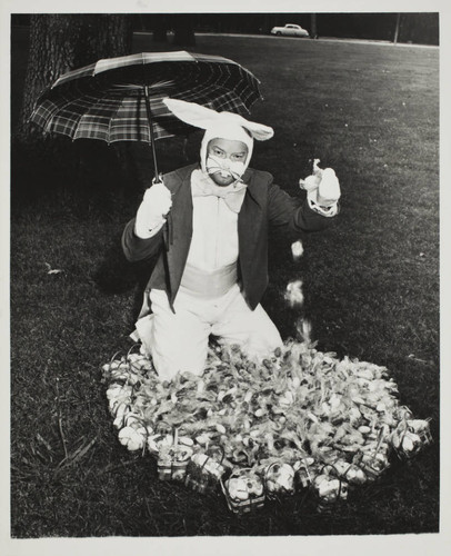 Exchange Club Easter Bunny at the Sonoma County Fair with his eggs, Santa Rosa, California, 1957